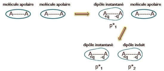 dipole induit