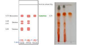 Extraction de m tabolites primaires et secondaires d 39 origine v g tale chromatographie sur - Chromatographie sur couche mince ...