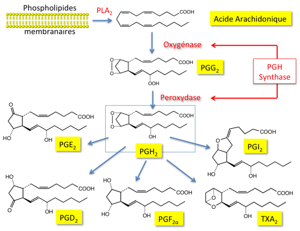Anti-Inflammatoires Non Stéroïdiens (Ains) - Aciclovir